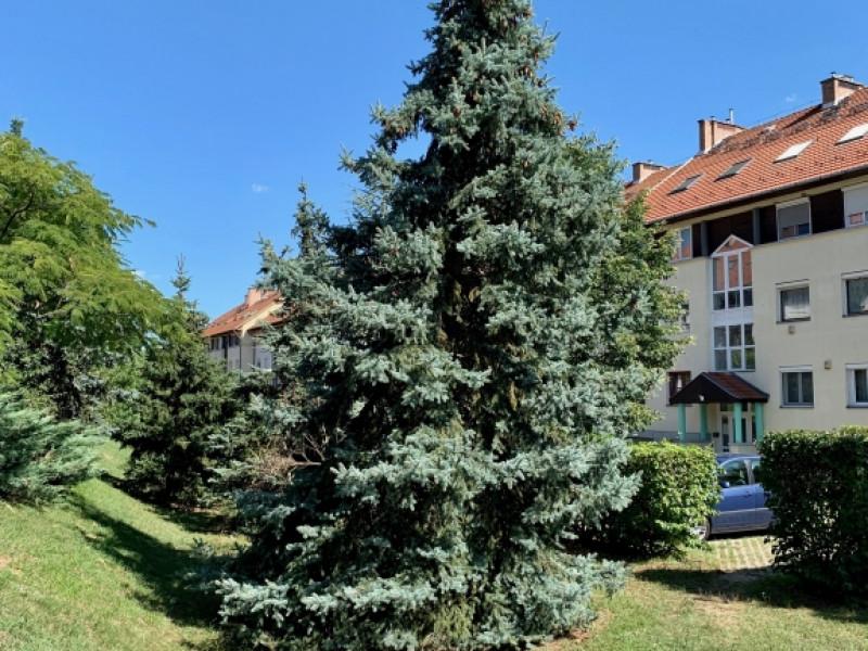 Budapest XXII. kerület Eladó Lakás